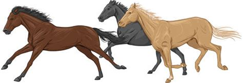 Palomino horse clipart 20 free Cliparts | Download images